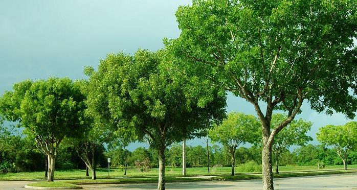 pohon contoh autotrofik