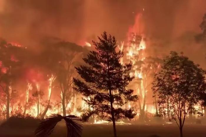 contoh teks eksplanasi kebakaran hutan