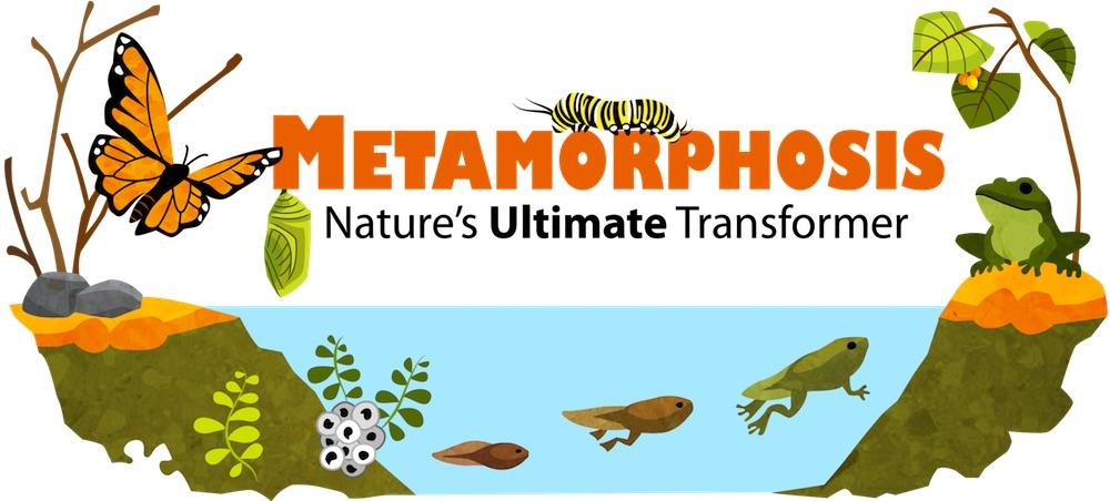 jenis jenis metamorfosis